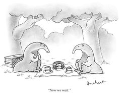 Picnic, anteater-style. Cartoons from the Issue of September 9th, 2013 : The New Yorker
