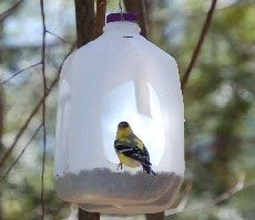 Recycled milk jugs or soda bottles as bird feeders.