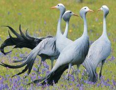 Birds of Chrissiesmeer