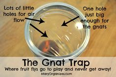 Armadilha para moscas da fruta - How To: Get Rid Of Fruit Flies For Good--I have been looking for this pin FOREVER! Cleaning Solutions, Cleaning Hacks, Getting Rid Of Nats, Gnat Traps, How To Get Rid Of Gnats, Insecticide, Fruit Flies, Smart Tiles, Cleaners Homemade