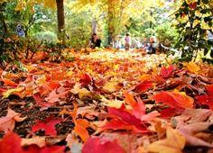 I loveeee fall