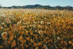 HANNA WAY: Central Coast in the springtime