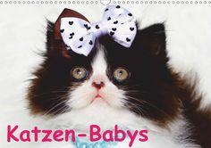 Katzen-Babys - CALVENDO Kalender von Elisabeth Stanzer