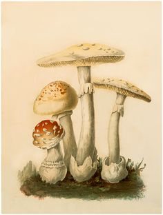 Botanical Mushrooms Download! - The Graphics Fairy