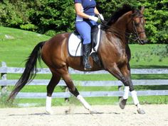 """Use the """"Canter-Trot"""" to Truly Engage the Hind End   Horse Listening"""