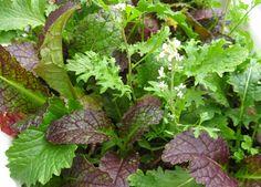 Growing Microgreens - #Phipps Porchside Gardening Blog