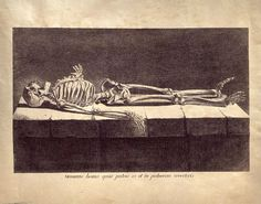 11x14 Vintage Anatomy. Laying Skeleton. Day of the Dead.
