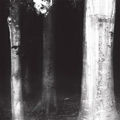 Charcoal by Brambles is an awesome ambient record. Have totally fallen in love with it.