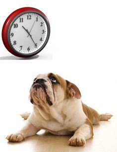 Cómo afecta a mi perro el cambio de hora. blog.theyellowpet.es