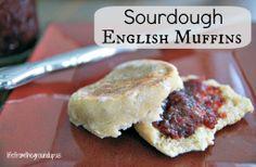 Sourdough English Muffin - lifefromthegroundup.us