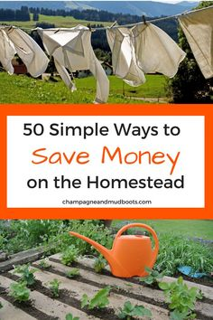 Simple and easy ways to save money on a homestead so you can create the homestead of your dreams without going broke in the process. Homestead Farm, Homestead Survival, Survival Skills, Homestead Living, Backyard Farming, Chickens Backyard, Get Off The Grid, Urban Homesteading, Hobby Farms
