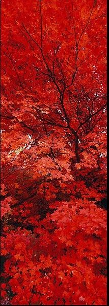 These red trees cause me to stop, take a big deep breath and remember how LARGE our GOD is. @RobbiePage1and2 Oneand2.com