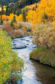 California Eastern Sierra Fall color