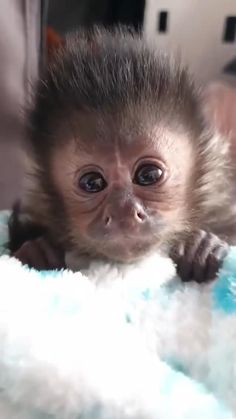 Baby Animals Super Cute, Cute Wild Animals, Baby Animals Pictures, Cute Little Animals, Cute Animal Pictures, Cute Funny Animals, Animals Beautiful, Animals And Pets, Cute Cats