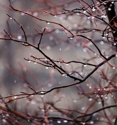~ Living a Beautiful Life ~ Autumn~ Freezing rain on the crabapple tree . Freezing Rain, I Love Rain, Jolie Photo, Rain Drops, Dew Drops, Rainy Days, Rainy Morning, Autumn Morning, Pretty Pictures