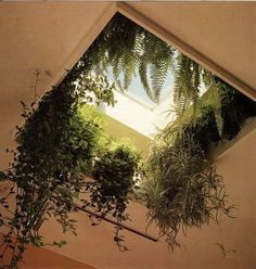 Remeber when I hung ferns from the skylight? Moon to Moon: Happy Hanging House…