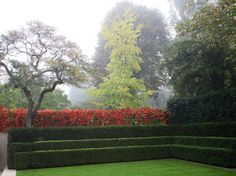 Blazing autumn vines as backdrop to a cleverly stepped hedge, Luciano Giubbilei - Addison Crescent.