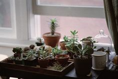 Miniature succulents are ideal for a compact, low-maintenence indoor garden for your Harcourts Central apartment.