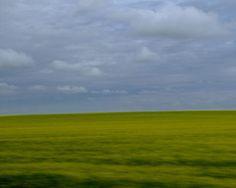 Montana Fields of Yellow