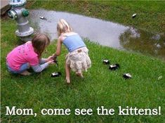 Come see the kittens!