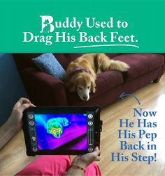 Buddy Came In Dragging His Feet and Left Running and Playing: http://www.bigcreekpet.com/buddys-story-cleveland-veterinarian-uses-technology-to-help-dogs-in-pain/?utm_source=Pinterest&utm_medium=social&utm_campaign=Buddy%20Story