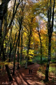<3 the awesome forests ............