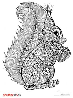 Hand Drawn Funny Squirrel With Nut For Adult Anti Stress Coloring Page With High Details Isolated On White Background, Illustration In Zentangle Style. Vector Monochrome Sketch. Nature Collection. - 311620643 : Shutterstock