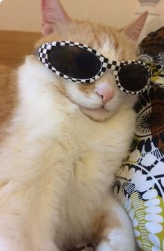 Khan cats with shades. funny cats, cute animals и animals Animals And Pets, Baby Animals, Funny Animals, Cute Animals, Kittens Cutest, Cats And Kittens, Wallpaper Gatos, Cat Sunglasses, Cat Aesthetic