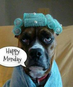 I'm so happy it's Monday! You be happy too! Good Morning Good Night, Good Morning Quotes, Image Facebook, Monday Morning Humor, Funny Morning Memes, Happy Monday Morning, Weekday Quotes, Monday Memes, It's Monday