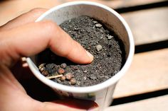 How to Grow Herb Gardens from Seed: - Sow the herb seeds 1-3 times deeper than the size of the seed. Very tiny seeds need only to be pressed into the soil. Water the seeds and cover the containers with plastic kitchen wrap. This will keep the soil warm and eliminate the need to water until the seedlings emerge. Place flats in a warm, sunny area. Until the seeds emerge, keep the soil damp.