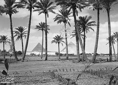 الجيزة كانت جنة خضراء في ثلاثينيات القرن الماضي :)  تاريخ الصورة سنة 1930 .