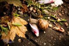 #snail, #flower, #photography, #Xander, #Gabe