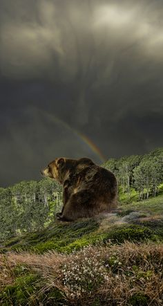 Bear by peter holme iii, via 500px (Thanks, Tracy)