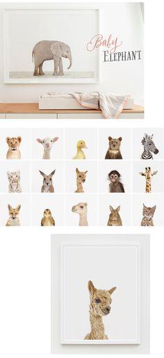 theanimalprintshop.com #portrait #retratos #animales #cachorros #puppies #deco #babies #niños