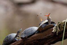 Butterflies Drinking Tears From Turtle And Alligator Eyes Look Like A Scene From Disney   Bored Panda
