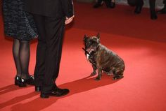 Carrie Fisher's dog on red carpet in Cannes :)