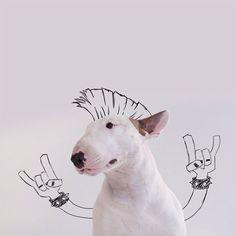 ilustraciones-interactivas-perro-jimmy-choo-rafael-mantesso (4)