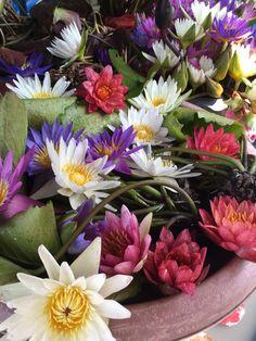 Colour bonanza, Water lilies. Bangkok, Thailand. photo by Mace Studio