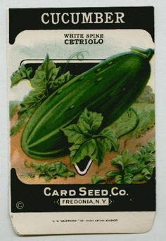 Antique Card Seed Company   Cucumber