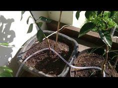 Como fazer irrigação por gotejamento super simples.