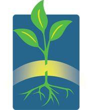 Vegetable Grafting - Research based information portal