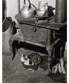 Le chat au poêle, Paris, 1947, Willy Ronis. (1910 - 2009)