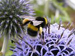 the best flowers to plant for (bumble)bees