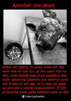 Adopt, spay and neuter/ Abuse is a Crime!!!