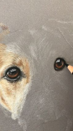 Work in progress video of a Terrier dog portrait, made using coloured pencils on Pastelmat Pencil Art Drawings, Realistic Drawings, Animal Drawings, Drawings Of Dogs, Dog Pencil Drawing, Cute Dog Drawing, Colored Pencil Portrait, Colored Pencil Artwork, Color Pencil Sketch