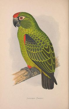 n129_w1150 by BioDivLibrary, via Flickr