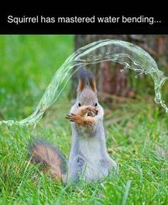 Squirrel is master of Water bender