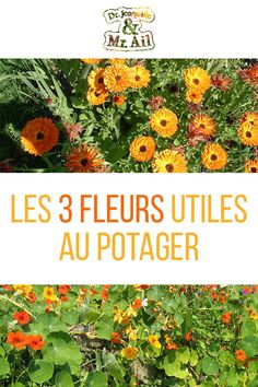 Les trois fleurs utiles au potager We present you the 3 useful flowers in the vegetable patch! Herb Spiral, Bee Friendly Plants, Potager Bio, Clematis, Garden Planning, Houseplants, Vegetable Garden, Shrubs, Planting Flowers