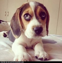 Murphy is always cutting his eyes like this....must be a beagle thing