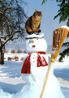 Kitty on the snowman.I Love cats! Funny Cats, Funny Animals, Cute Animals, Funniest Animals, Silly Cats, Baby Animals, Crazy Cat Lady, Crazy Cats, I Love Cats